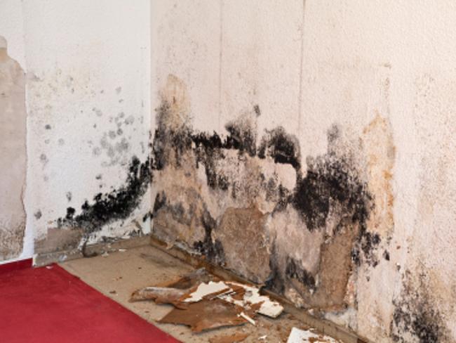 Mold Project 1 Testimonials